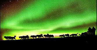 Mushing Under the Northern Lights