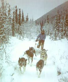 Dog Mushing in preparation for the Yukon Quest